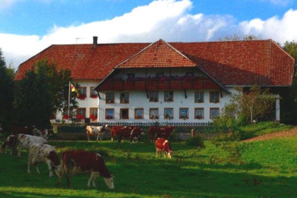 Nestorhof