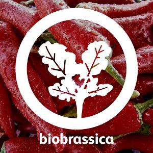 Biobrassica