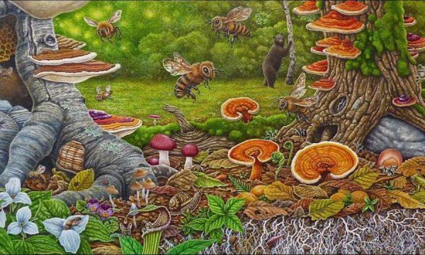 Pilze im Wald - Illustration